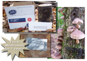 mushroom logs for sale