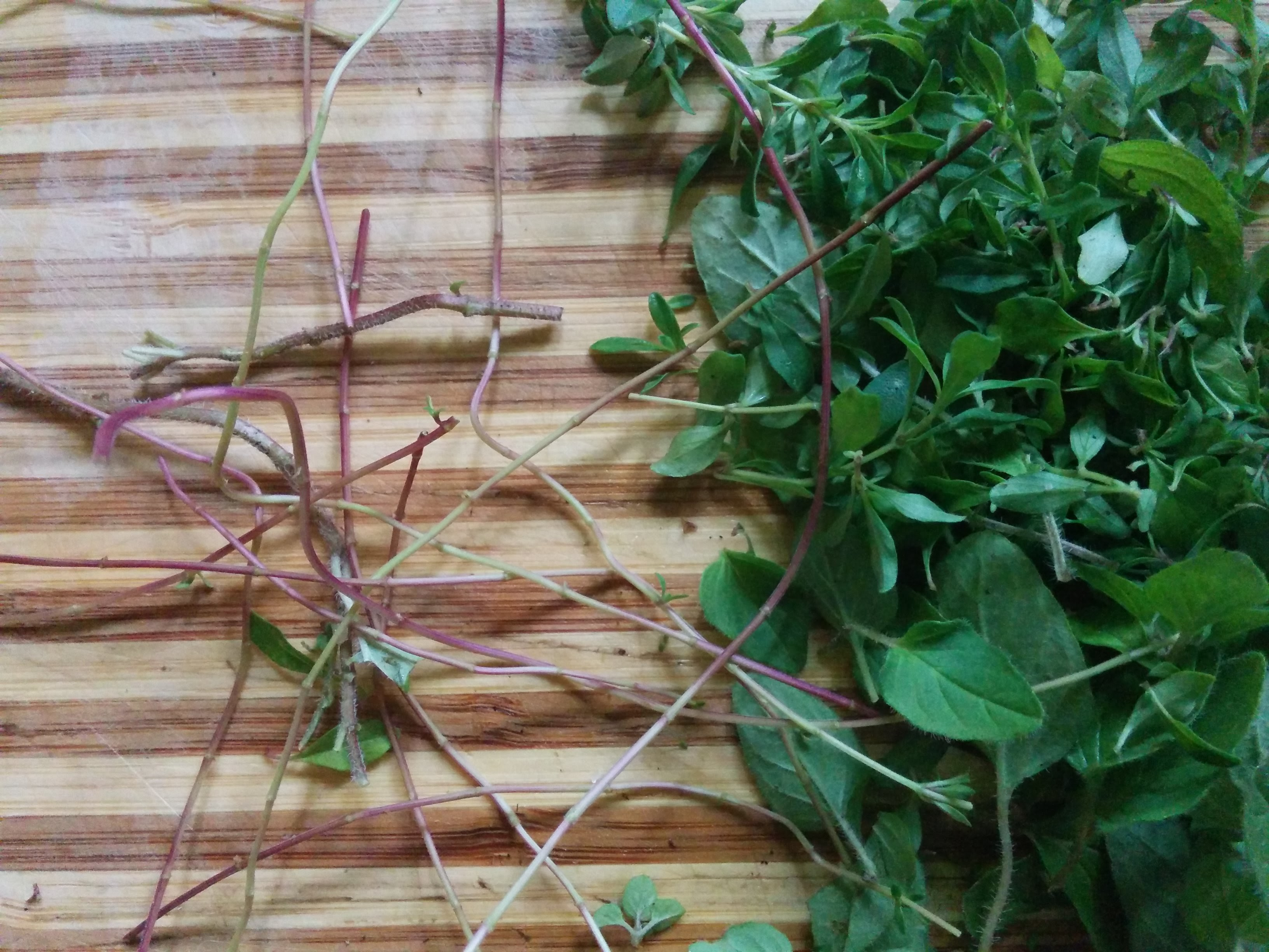 Herbs Strpped From Stems